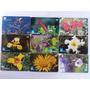 Loucura Série Flores Do Cerrado (9 Cartões) Telegoiás Original
