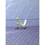 Mantis Religiosa Stagmomatis Limbata L1-l2