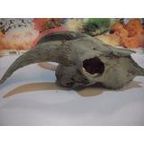 Adorno Esqueleto Cabeza Cabra Simil Real