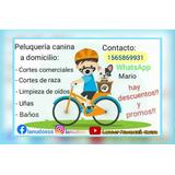 Peluqueria Canina A Domicilio, Moreno, Zona Oeste