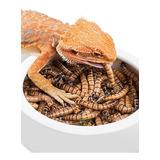 Zophobas X 200 Alimento Vivo Gusanos Gecko Pogona Envios