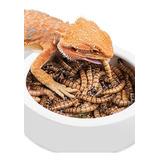 Zophobas X 1000 Alimento Vivo Gusanos Gecko Pogona Envios