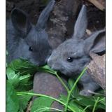 Conejos Para Tu Alegria :)