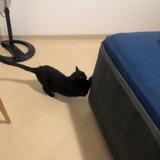 Gato Arranhador E Protetor Cama Box