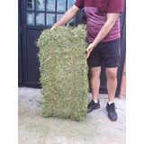 Paca Alfalfa Bien Verde Y Buena 20kg Con Envio