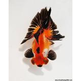 Pez Cola De Mariposa Doradogoldfish Importacion Shangai Lujo