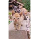 Gatos Gatitos En Adopción