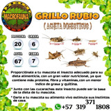 Acheta Domesticus - Grillo Rubio - Alimento Vivo