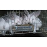 Conejos De California Y Nueva Zelanda 100 % Cárnicos