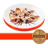 Cucaracha Gigante Blaberus 30pzas (madagascar Lobster Dubia)