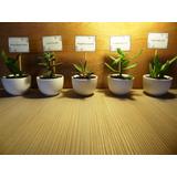 Regalos Recuerdos Eventos Cactus Elegante Cerámica Y Mensaje