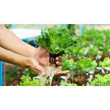Kit De Sales Hidroponia Solucion A+b+c Nutrientes 1000lt Env