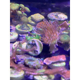 Corales Blandos 6x5 Marinos