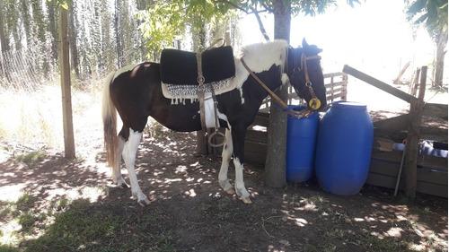Yegua  Madre Y Potranca  Hija