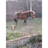 Pony Padrillo
