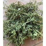 Alfalfa Fresca En Heno