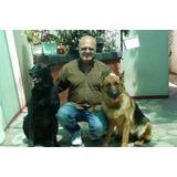 Adiestramiento Canino Profesional - Jorge Arazi