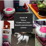 Pensionado / Guarderia Para Perros Y Gatos