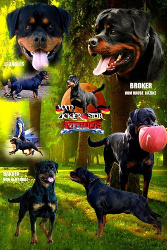 Rottweilers Cachorros Excelentes !100% Calidad