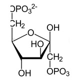 Lugol X 1 Litro Al 5% Desinfectante