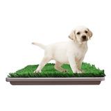 Bandeja Sanitaria Mascotas Con Paño Absorbente Perros Cachorros Bulldog Frances Bulldog Ingles Pitbull 40% Off!!