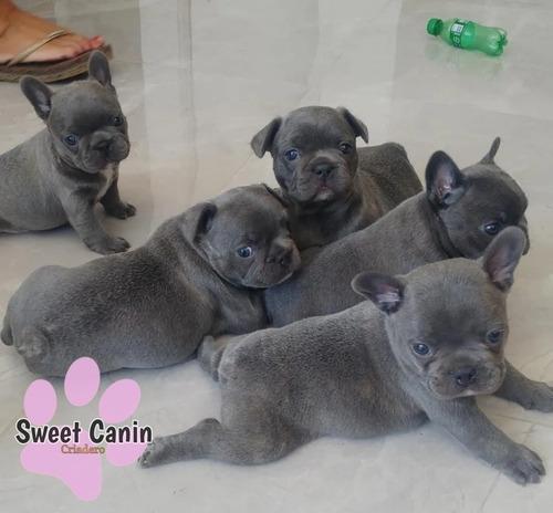 Reserva Bulldog Francés Blue Sweet Canin