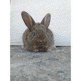 Conejos Envios A Domicilio En Cuarentena