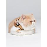 Bandana Para Mascotas Lucy Pet Club