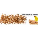 Tenebrios X 100 Alimento Vivo Tarántula Escorpiones Hormigas