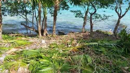 ! de oportunidad ¡terreno en bacalar con frente de laguna
