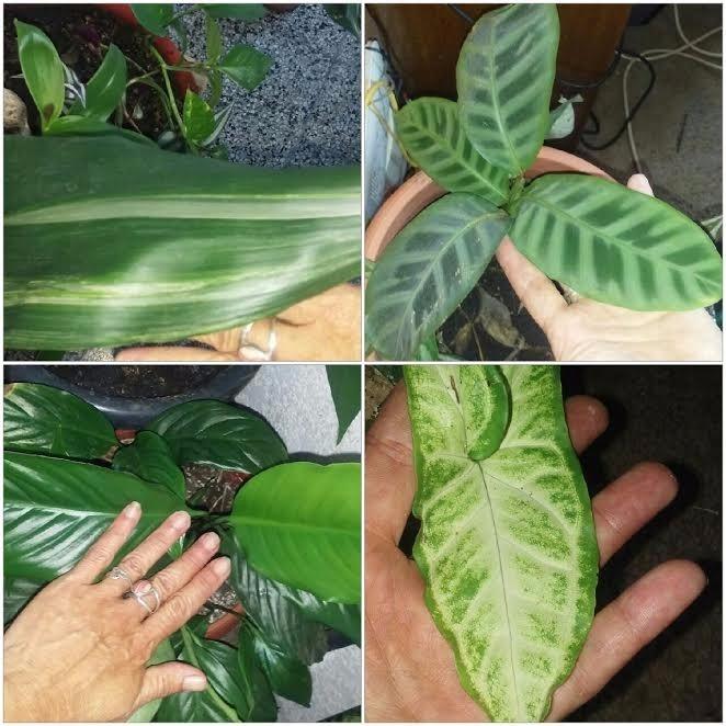 Decorativas Plantas De Interior Y Exterior. (variedad) * - $ 150,00 ...