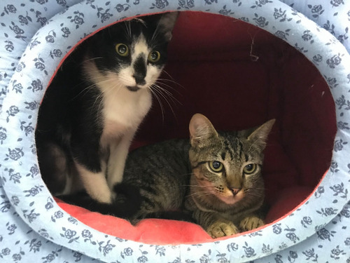 *** doação *** 2 gatinhos filhotes, irmãos, lindos!