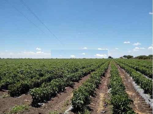 ¡¡ excelente terreno de 36 hectareas con riego en pedro escobedo !!