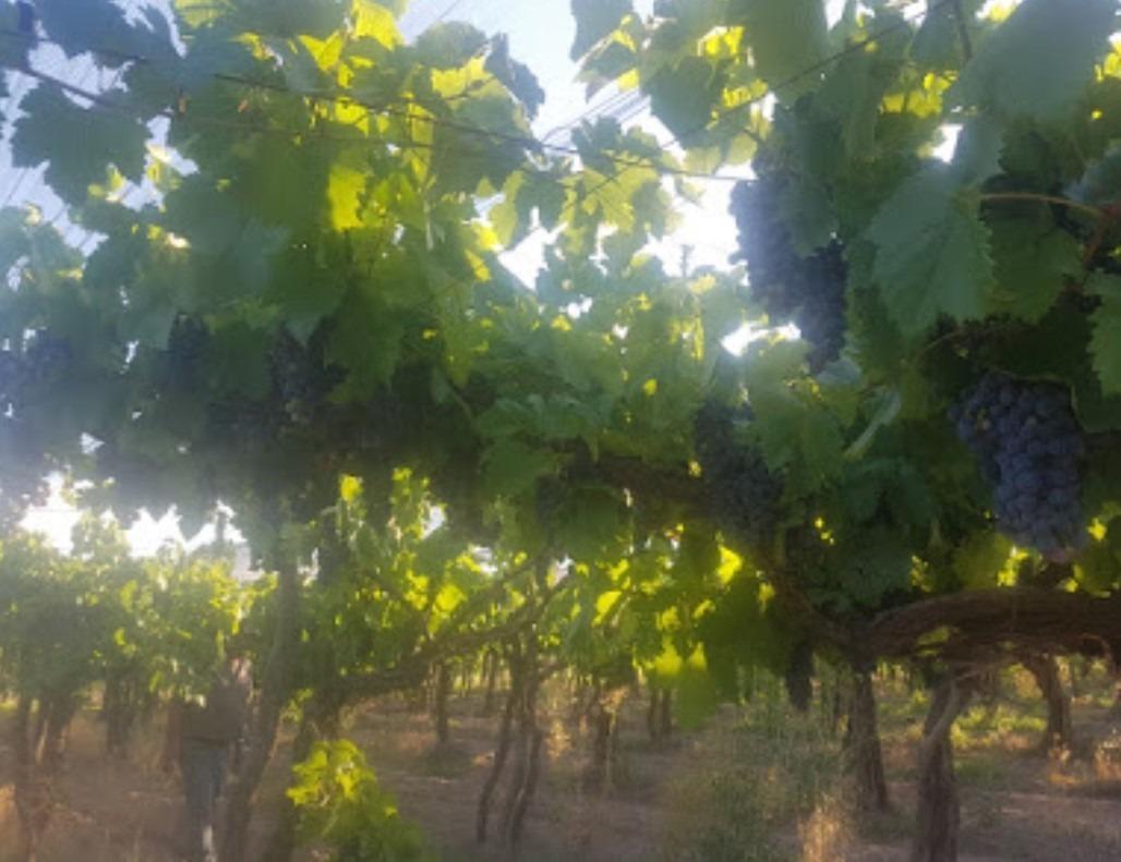### finca 14 hectáreas ### viñedos ### riego programado ###