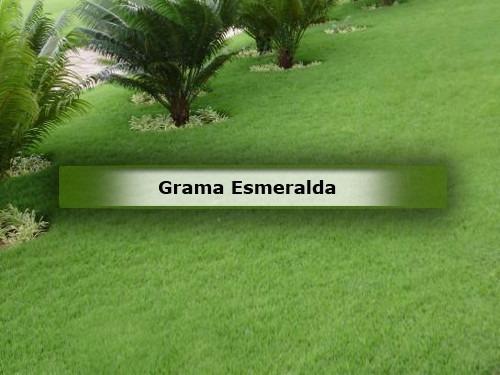 01 kg de grama esmeralda para 1000m² 100% puras frete grátis