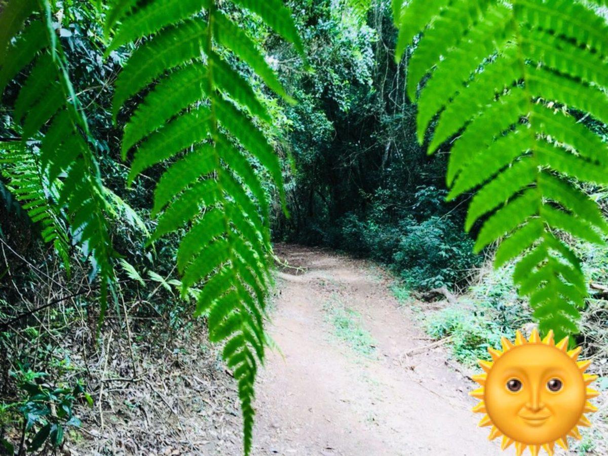01- lotes com trilha ecologica e lago ñ é condominio