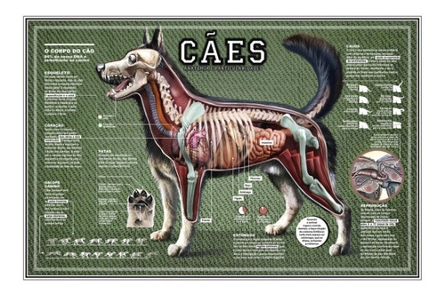 02 mapas 65x100cm anatomia e características cachorro + gato