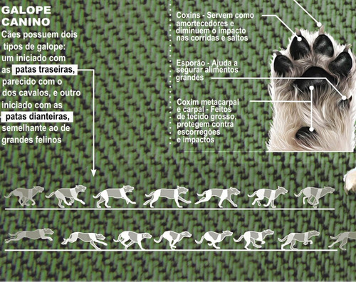 02 posters 65x100cm anatomia e características cães & gatos