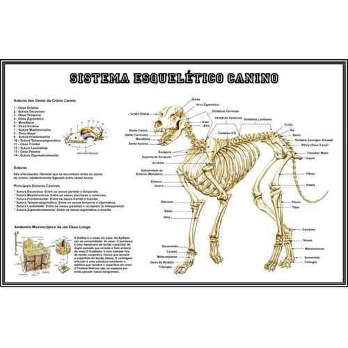 03 posters medicina veterinária 65x100cm -- corpo canino