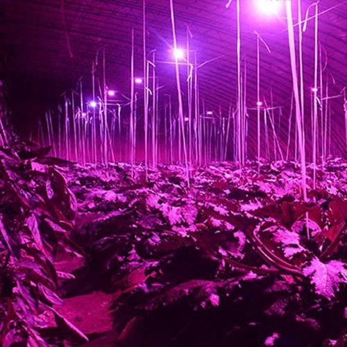 1 foco led cultivo indoor grow light full espectro ir uv 28w