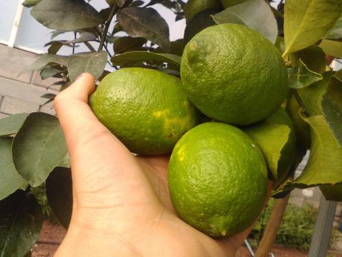 1 naturalito,  agua fresca con limón y stevia.