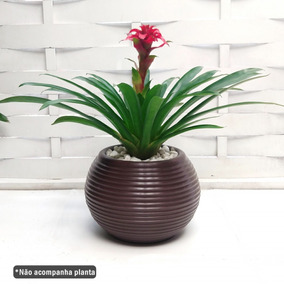 0a2987b51 Orquideas Azaleia no Mercado Livre Brasil
