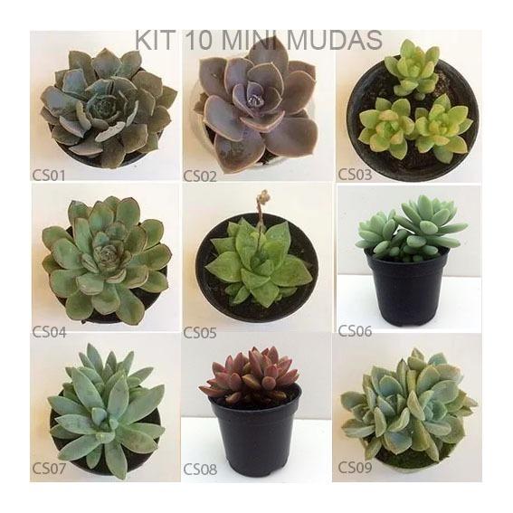 10 mudas de mini suculentas e mini cactos para for Tipos de suculentas y sus nombres