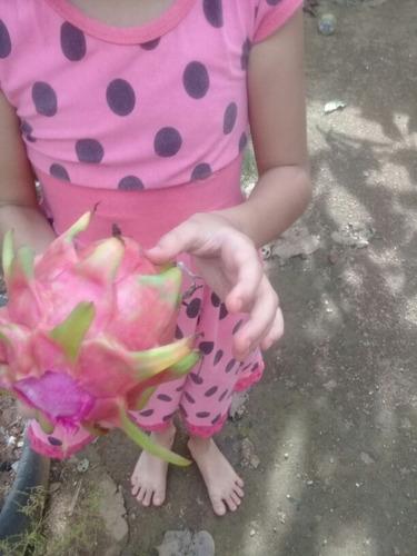 10 pitaya   diferente tipos variedade