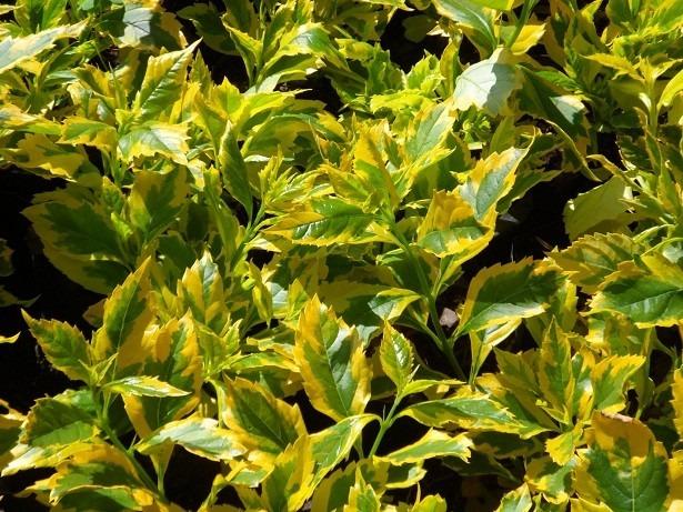 10 plantas para jard n en mercado libre - Plantas para jardin ...