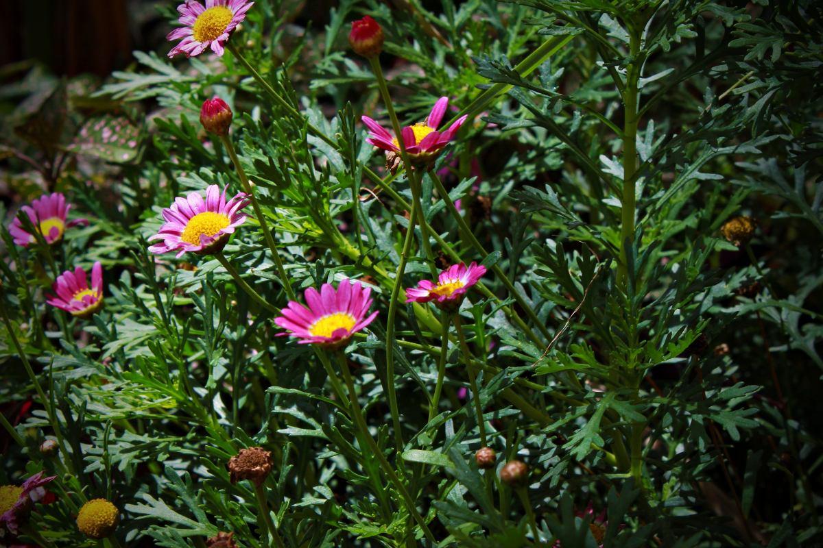 10 Plantas Para Jardín  $ 7500 en Mercado Libre