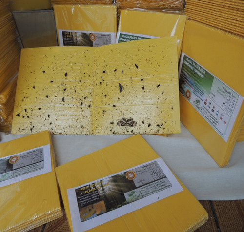 10 refil adesivo armadilha luminosa mata mosquito 47x22 cm