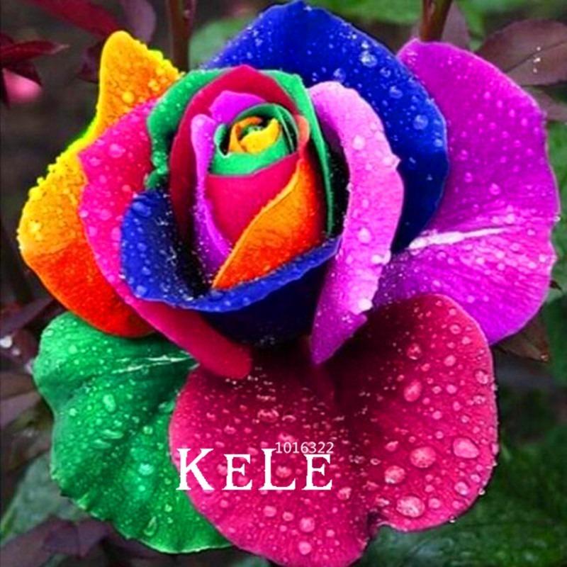 10 Sementes De Flores 4 Estações Lindas Cores
