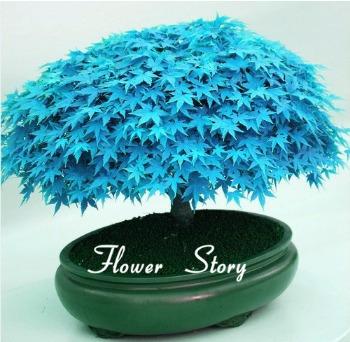 10 sementes de lindos bonsais japonês 8 cores/tipos p/ mudas