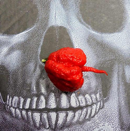 10 semillas de chile carolina reaper y muestra gratis